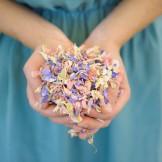 Shropshire Petals